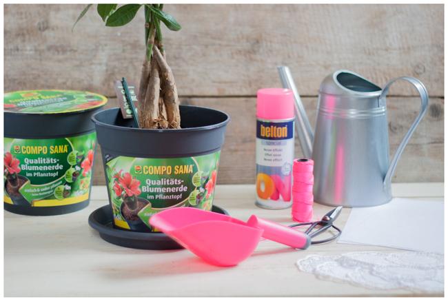 DIY-Zutaten-Pink-650px