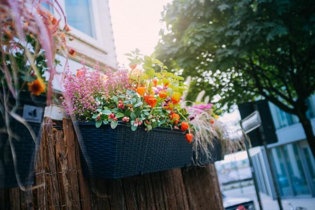 26_09_16_rent_a_balcony_gral_zucker_pflanzenfreude_hamburg_day_1_27