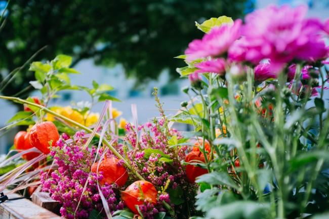 26_09_16_rent_a_balcony_gral_zucker_pflanzenfreude_hamburg_day_1_36