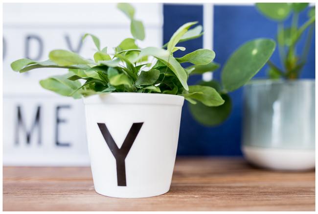 Gruenpflanze-im-Topf-Y