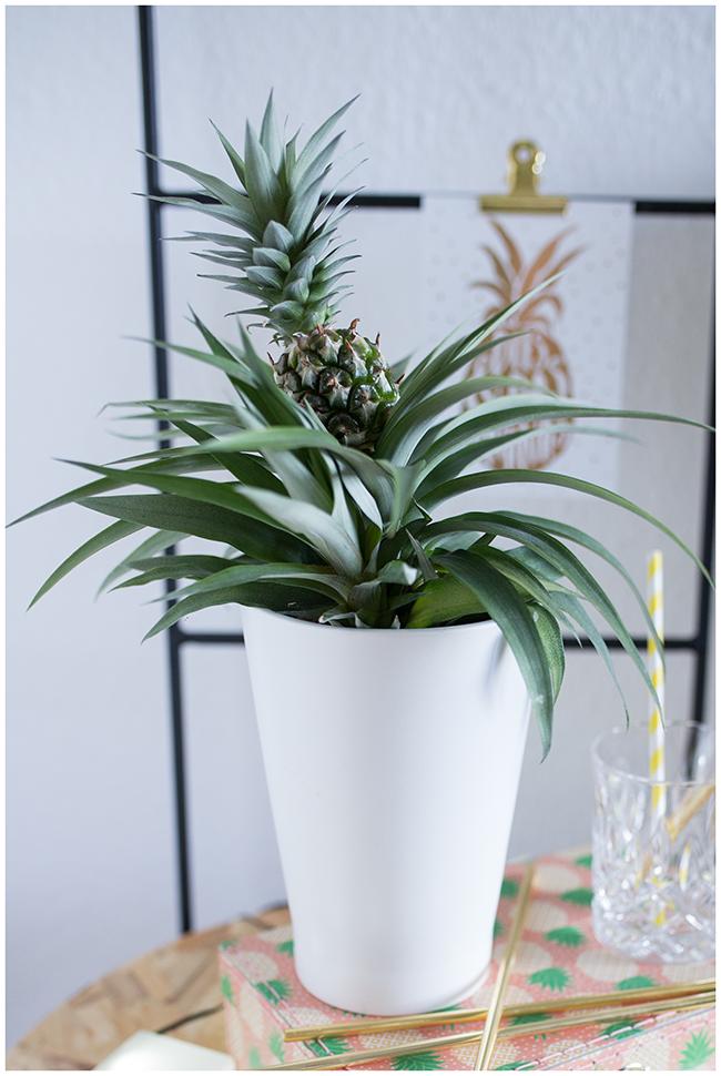 Grünpflanze Ananas