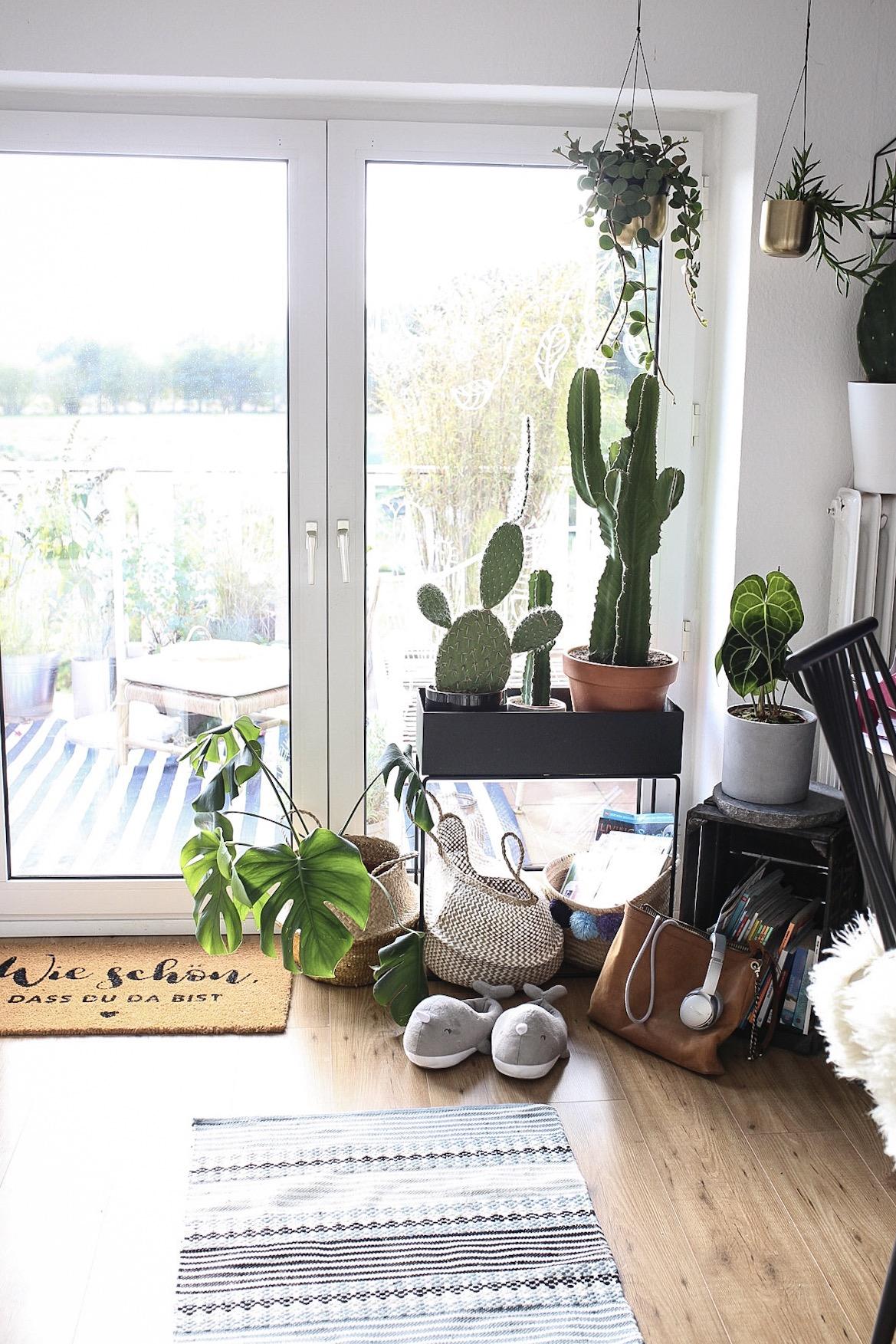 Kaktus im Südfenster