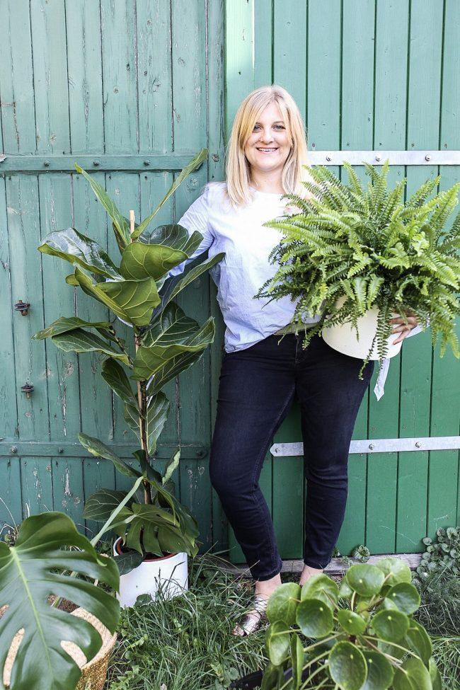 Zimmerpflanzen schenken Freude