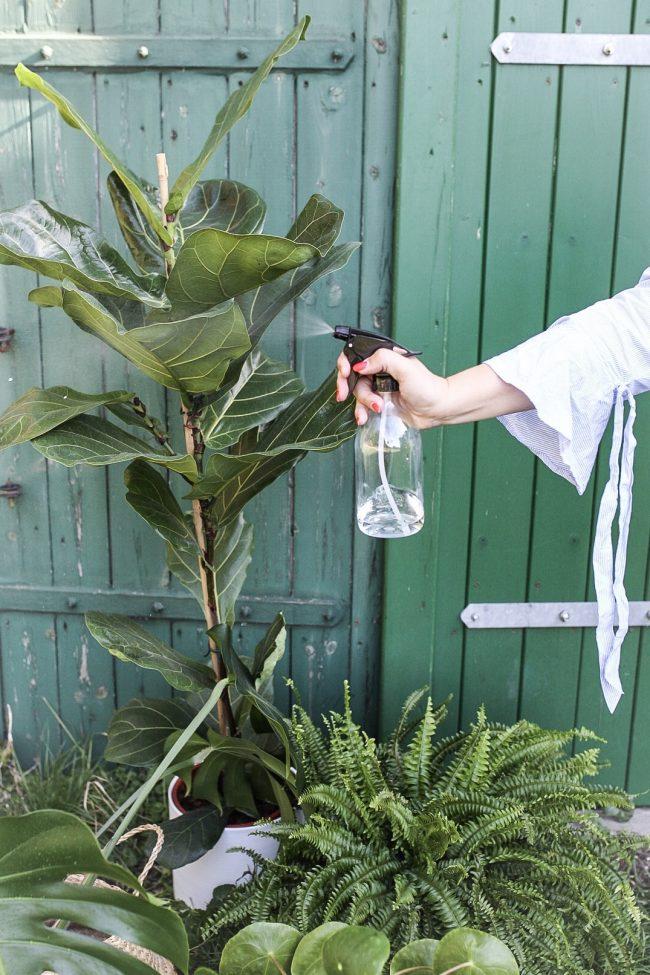 Pflegetipps für Zimmerpflanzen - Mit Wasser besprühen