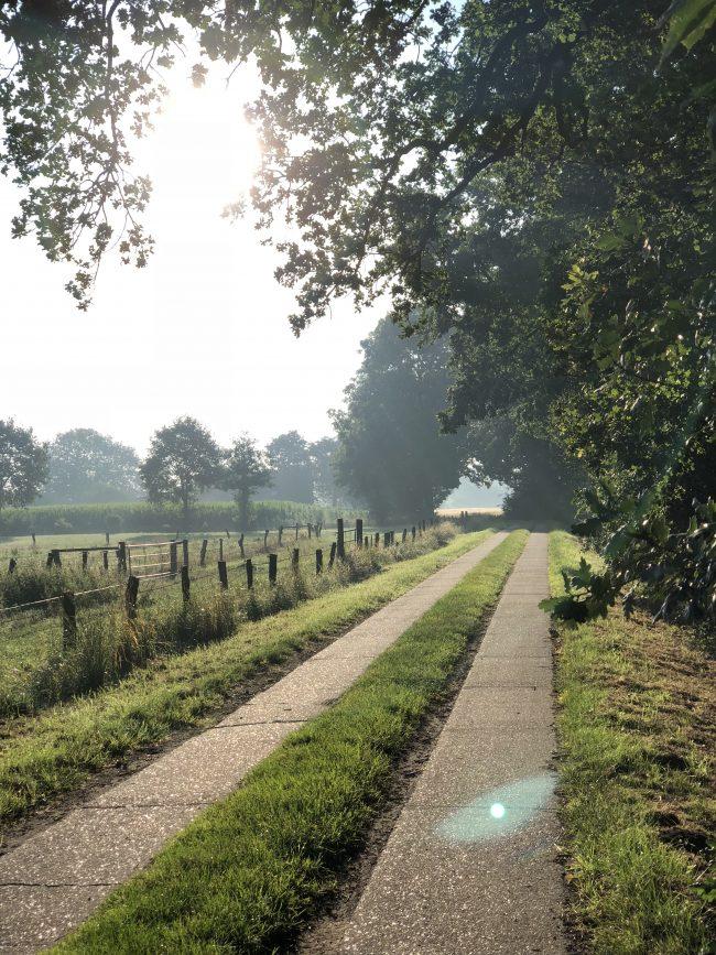 Landleben - Spaziergang im Morgenlicht - Spurbahn